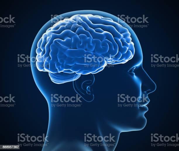 Human brain xray 3d illustration picture id888957362?b=1&k=6&m=888957362&s=612x612&h=j60d2jlevw3z zh7kecqw4wkfrx4xdg4upde1dn8h4u=