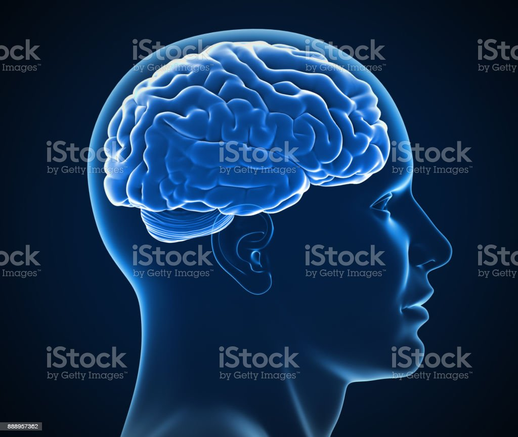 human brain x-ray 3d illustration stock photo
