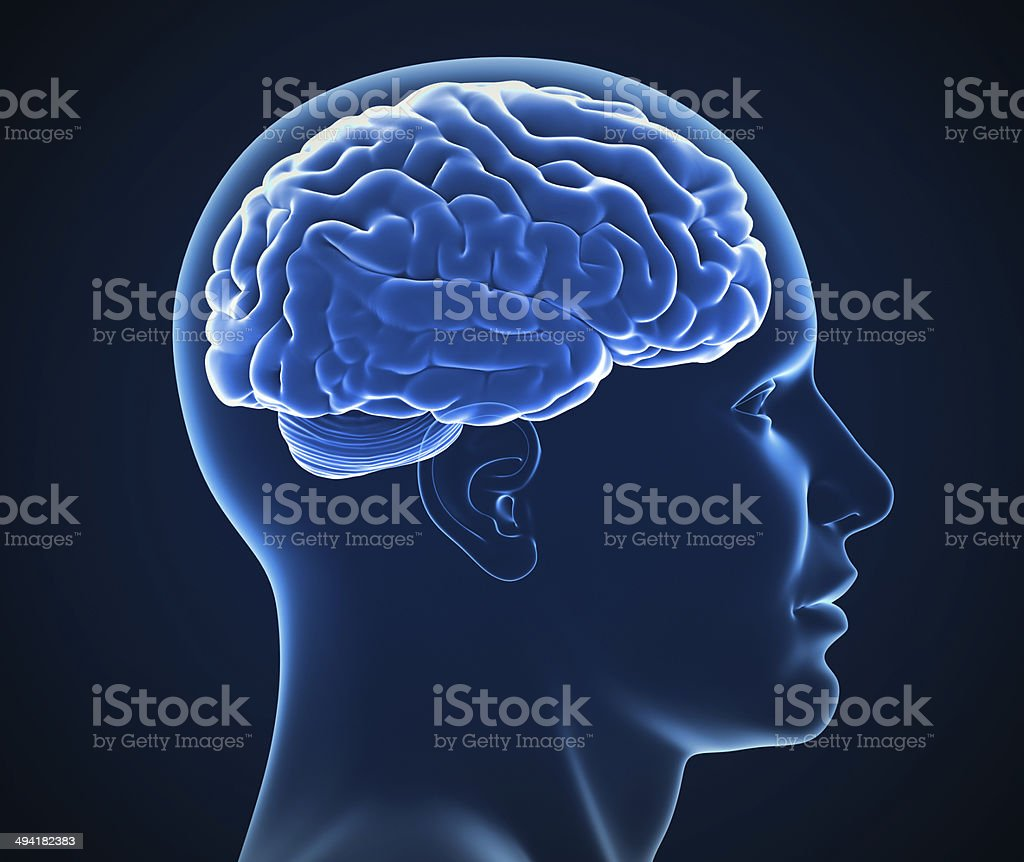 human brain x-ray stock photo