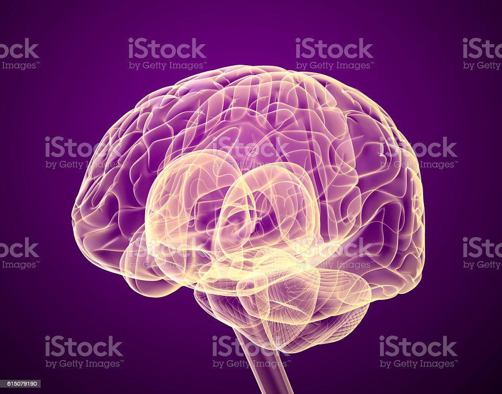 Human brain X-ray scan , Medically accurate 3D illustration stock photo
