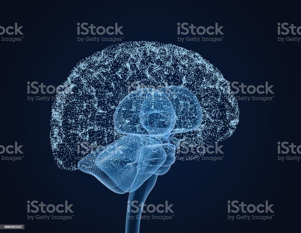 Mänskliga hjärnan röntgen scan, medicinskt korrekt 3D illustration - Royaltyfri Anatomi Bildbanksbilder