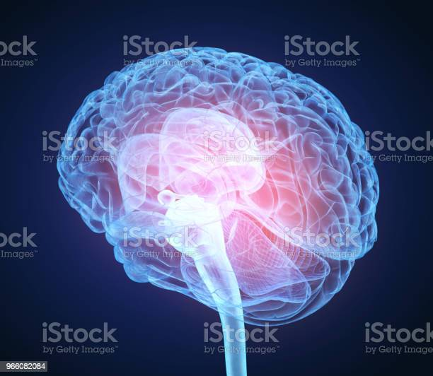 Рентгеновское Сканирование Мозга Человека Медицинская Точная 3d Иллюстрация — стоковые фотографии и другие картинки Анатомия