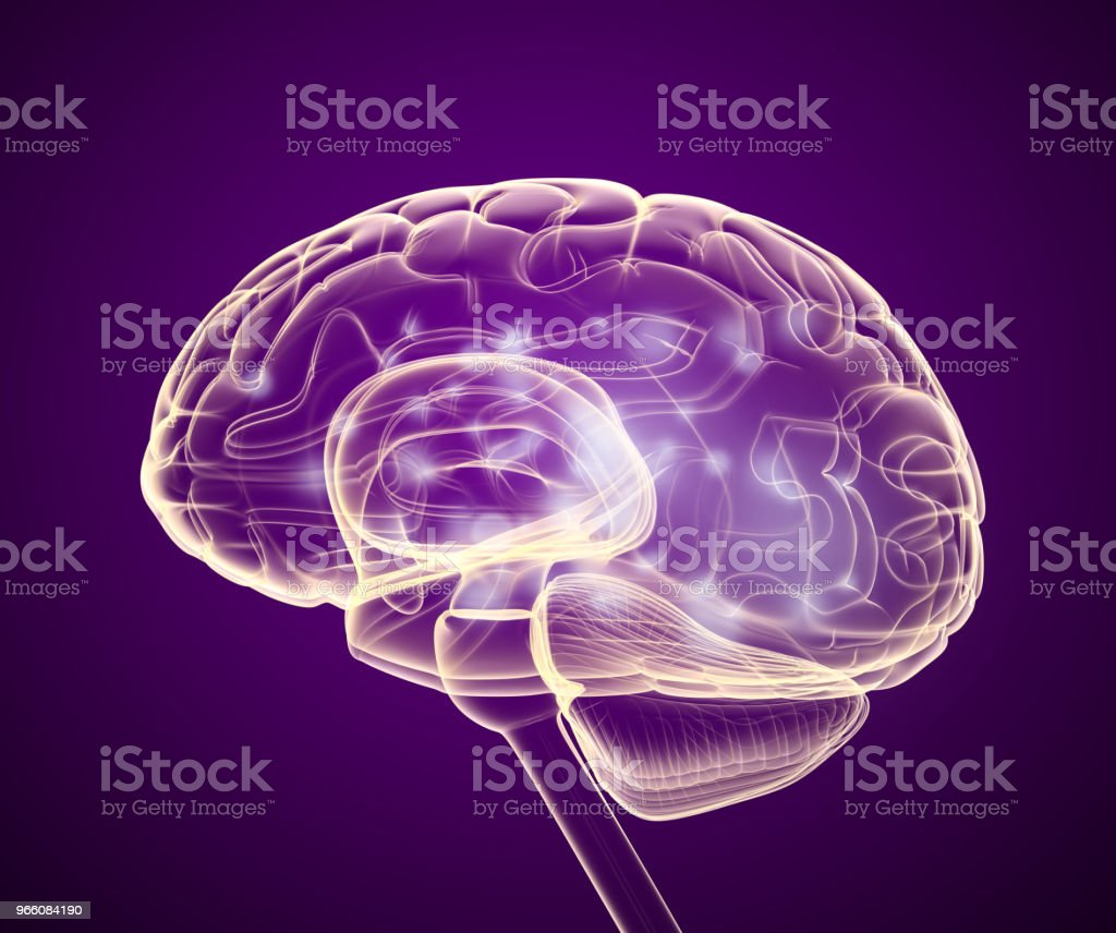 Human brain X-ray scan , Medically accurate 3D illustration royalty-free stock photo