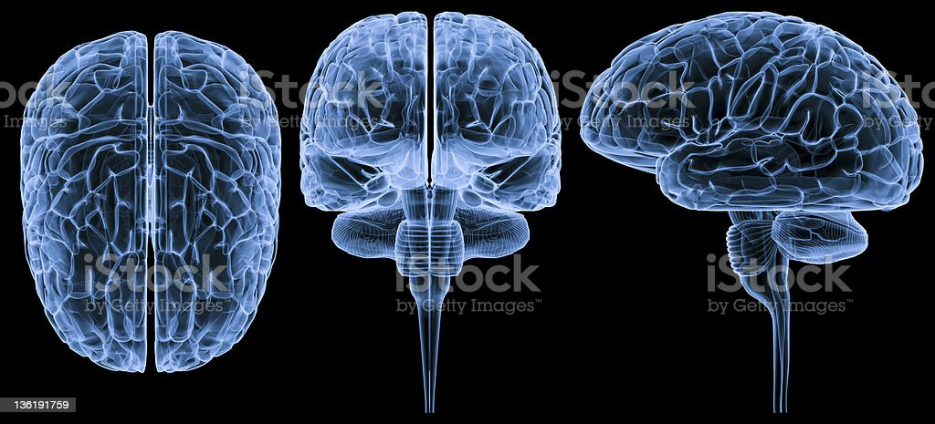 Human brain-3 views XXXL stock photo