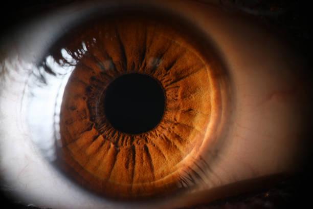 Human brown eye supermacro closeup stock photo
