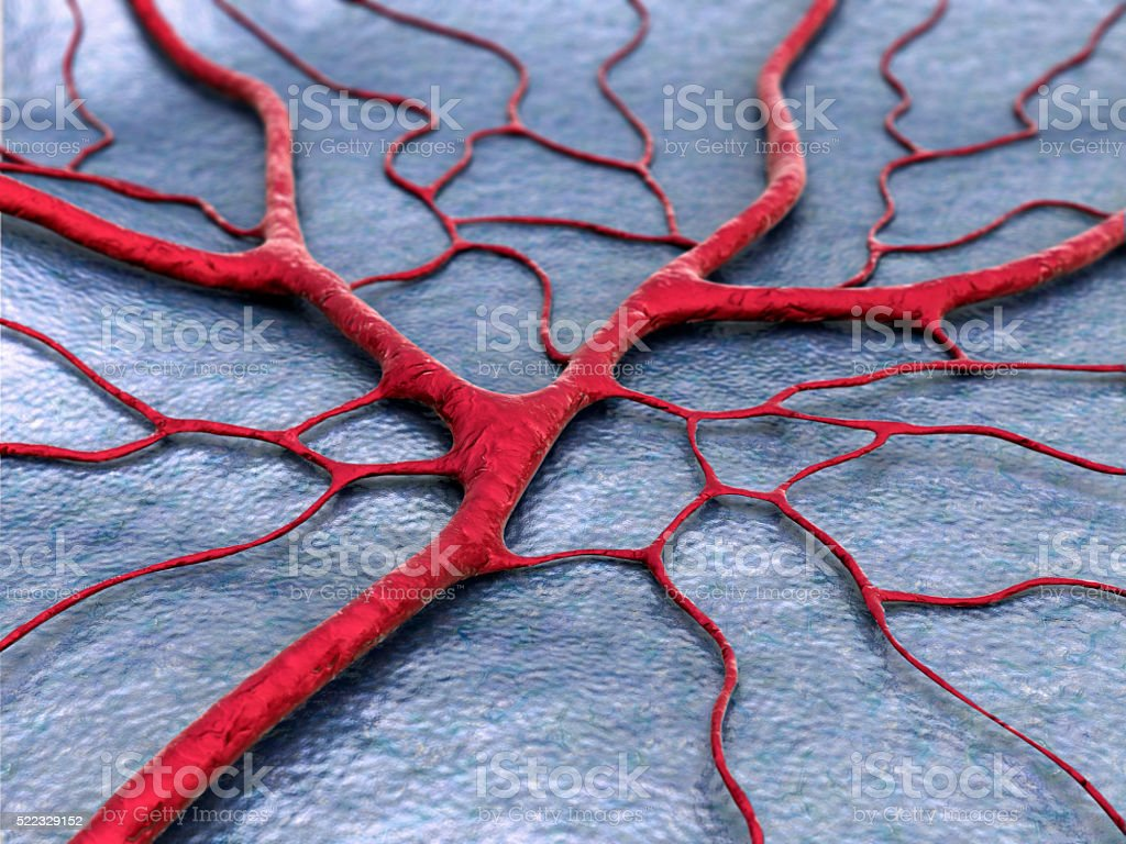 human Capillary close up stock photo