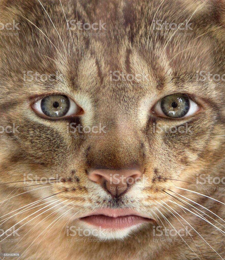 human cat stock photo