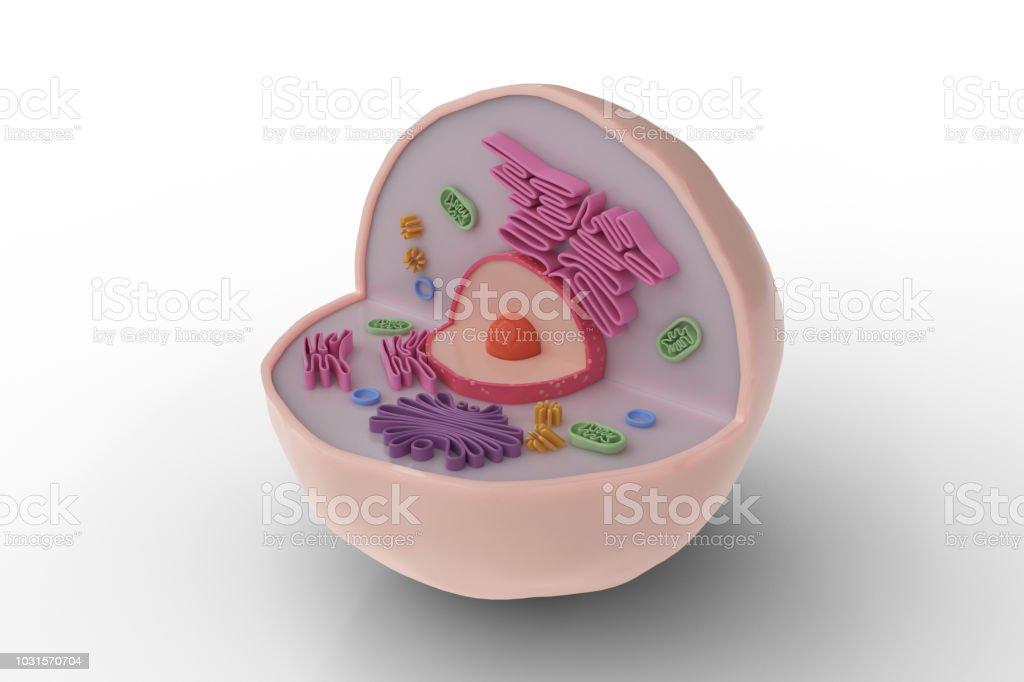 Estructura de anatomía humana de la célula aislada sobre fondo blanco. 3D prestados ilustración. - foto de stock