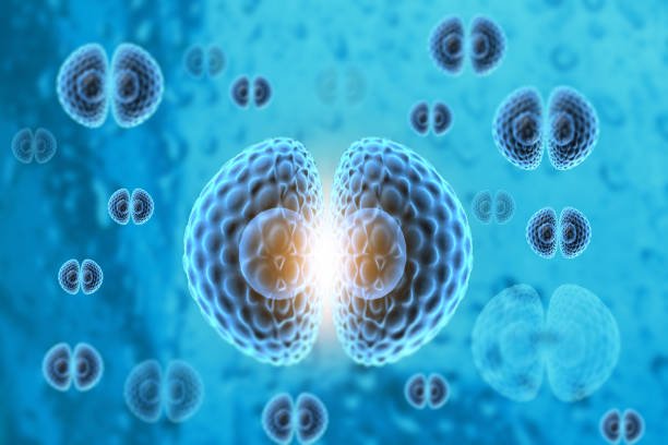 Human Cell division with science background stock photo