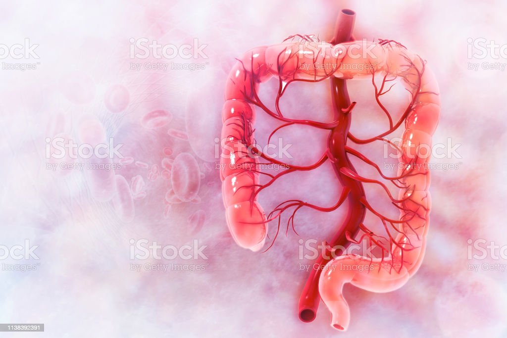 imagen del colon humano
