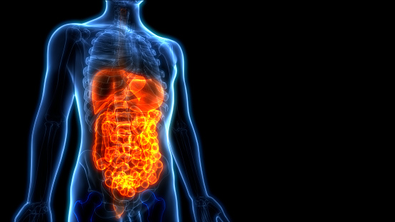 istock Human Digestive System Anatomy 1022368008