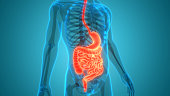istock Human Digestive System Anatomy 1252872567