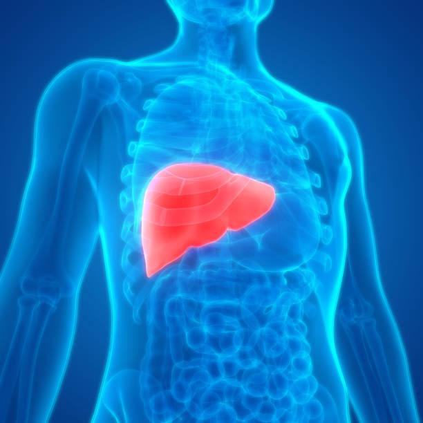 sistema digestivo humano anatomia hepática - vesicula biliar - fotografias e filmes do acervo