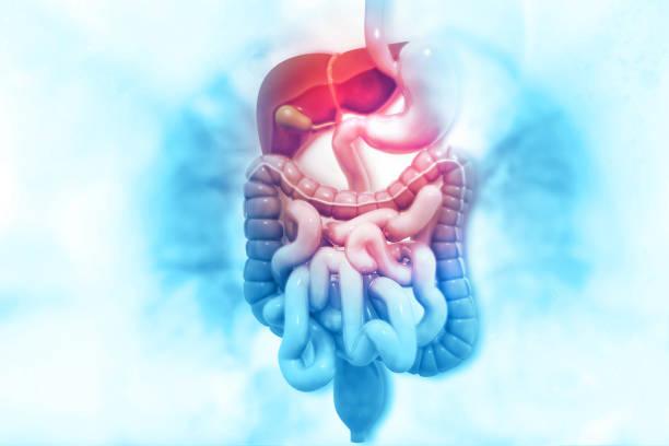 sistema digestivo humano na formação científica - sistema digestivo humano - fotografias e filmes do acervo