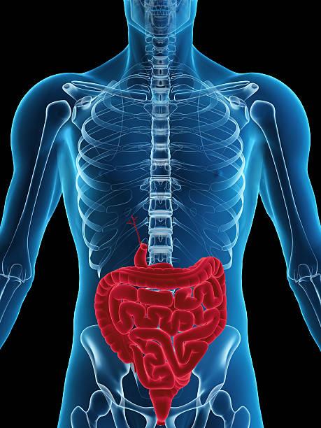 sistema digestivo humano - sistema digestivo humano - fotografias e filmes do acervo