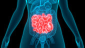 istock Human Digestive System Small Intestine Anatomy 1250193639