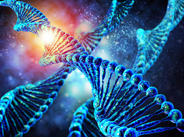 Human dna string High resolution 3d render of human dna string nucleotide stock pictures, royalty-free photos & images