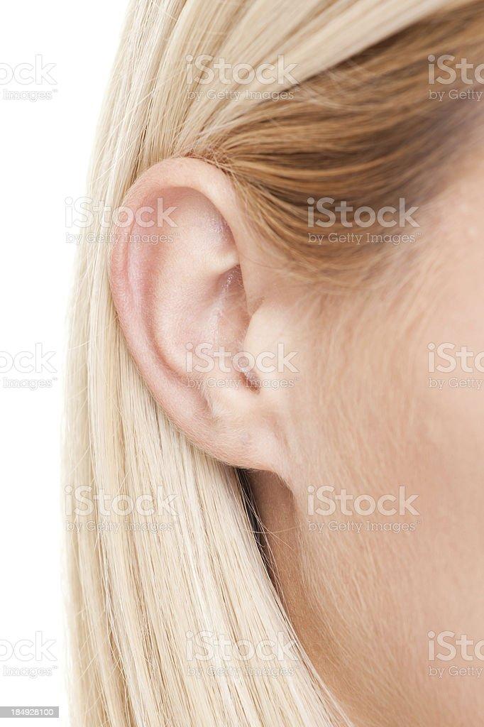 human ear stock photo