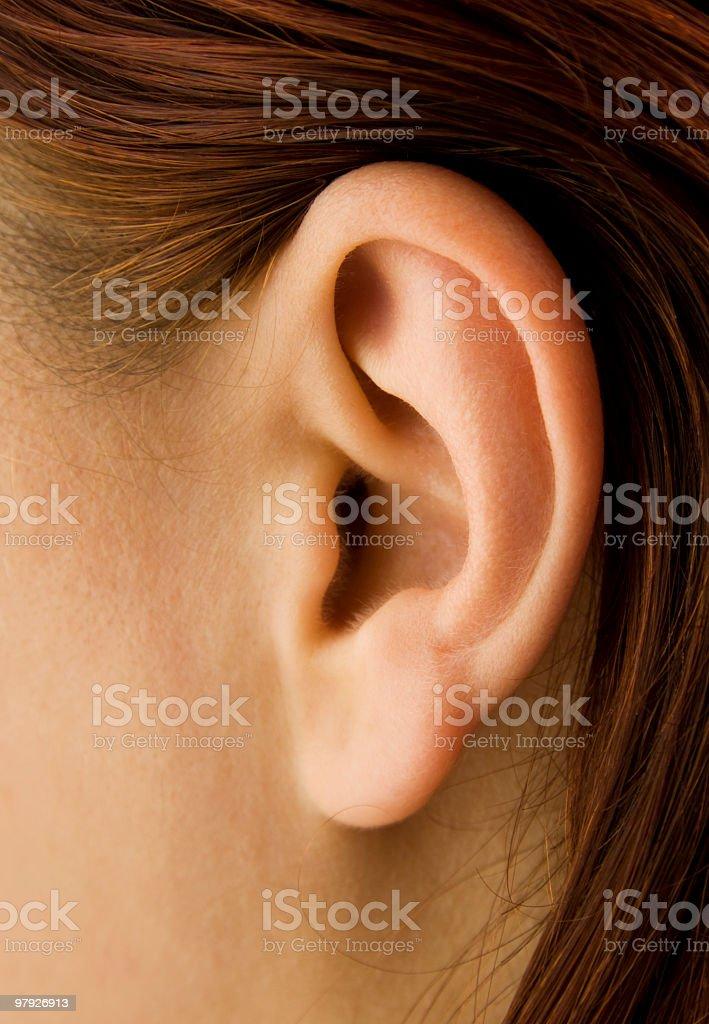 human ear royalty-free stock photo