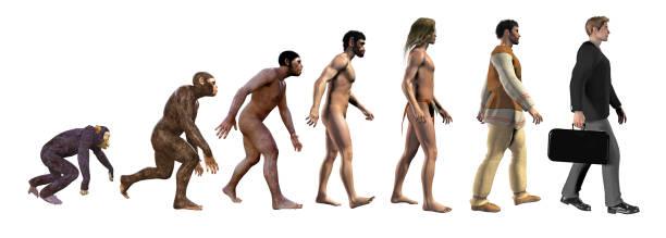 human evolution, from ape to modern business man, 3d illustration - man evolution foto e immagini stock