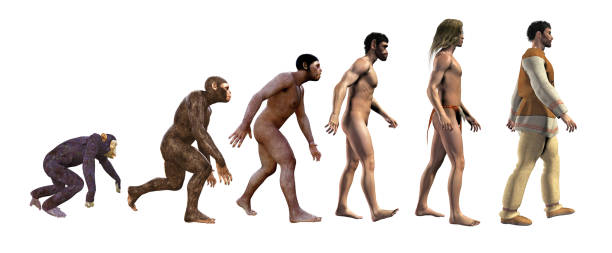 human evolution - ape stock pictures, royalty-free photos & images