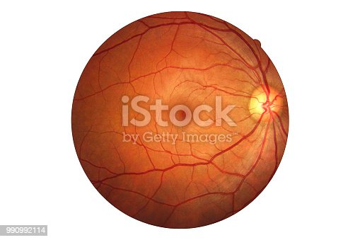 Human eye anatomy taking images with Mydriatic Retinal cameras