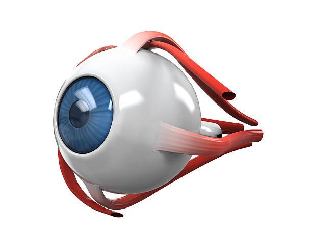 menschliche auge dissection anatomie - illustration optician stock-fotos und bilder