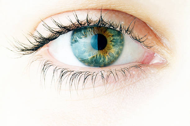 human eye. macro shooting... - eye stock pictures, royalty-free photos & images