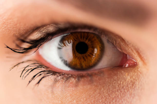human eye - eyes stock photos and pictures