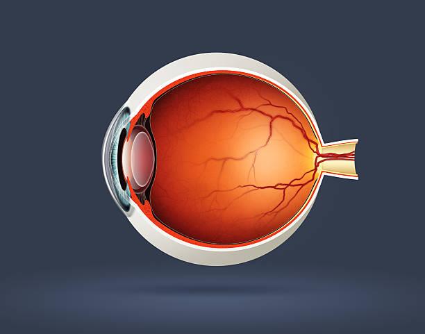 ludzkie oko - soczewka gałka oczna zdjęcia i obrazy z banku zdjęć