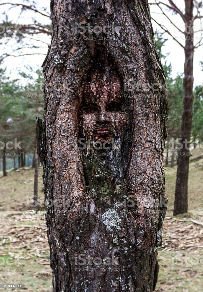Human face inside a tree trunk stock photo
