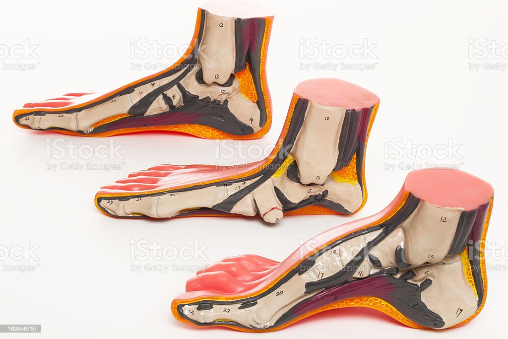 Human feet royalty-free stock photo