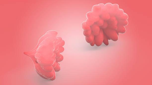 Human Female Body Organs (Mammary Glands) - foto de acervo