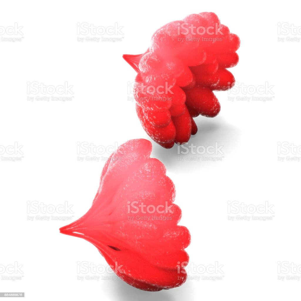 Human Female Body Organs stock photo 864889876 | iStock