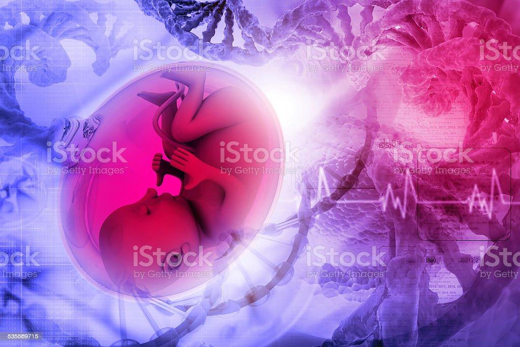 Human fetus stock photo