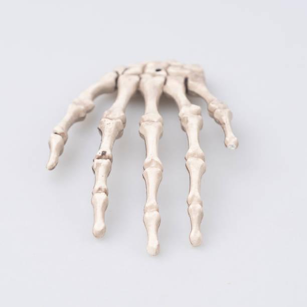menschlichen fingerknochen, halloween-konzept - skelett hand stock-fotos und bilder