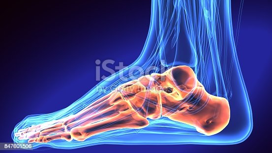istock Human Foot Anatomy Illustration . 3D render 847601506