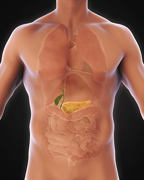 biliar humanos e pâncreas humano - vesicula biliar - fotografias e filmes do acervo