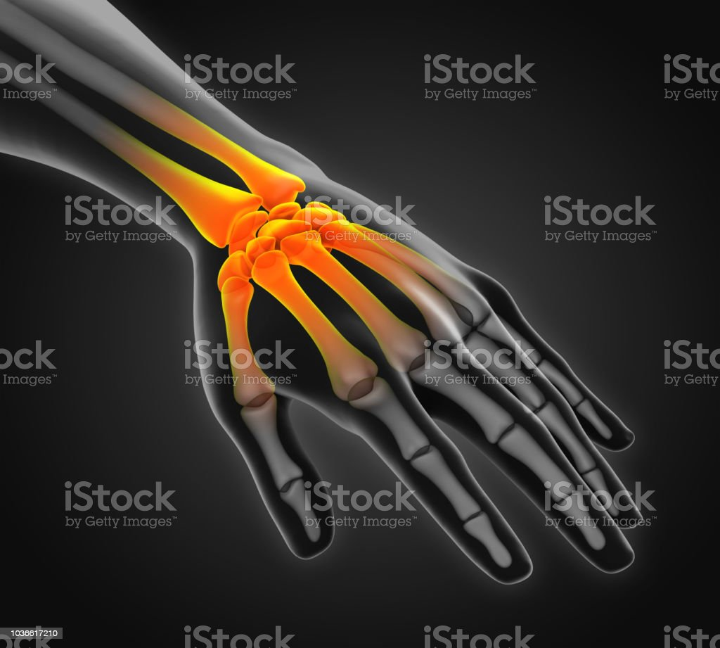 Human Hand Anatomy Illustration Stock Photo More Pictures Of