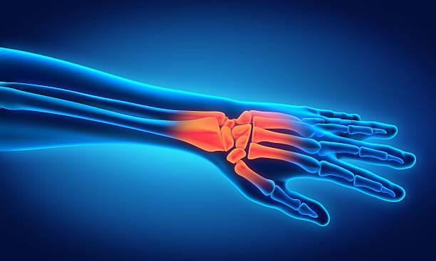 menschliche hand anatomie - skelett hand stock-fotos und bilder