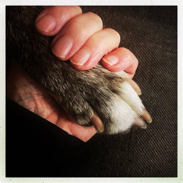 Human hand and dog paw picture id933234942?b=1&k=6&m=933234942&s=612x612&w=0&h=xktz1wjz8bancelxnaxhjuudevuut7uim7eagztwnmq=