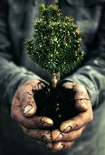 Human Hand and tree - Environmental Conservation [url=http://www.istockphoto.com/file_search.php?action=file&lightboxID=8732164][img]http://www.avalonstudio.eu/istock/vetta.jpg[/img][/url]  [url=file_closeup.php?id=18055240][img]file_thumbview_approve.php?size=1&id=18055240[/img][/url] [url=file_closeup.php?id=13307915][img]file_thumbview_approve.php?size=1&id=13307915[/img][/url]