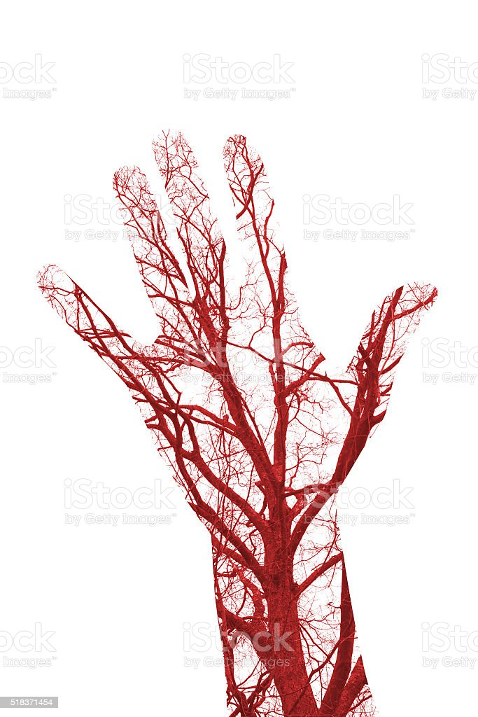 Human Hand Blood Cells Vessels Stock Photo More Pictures Of