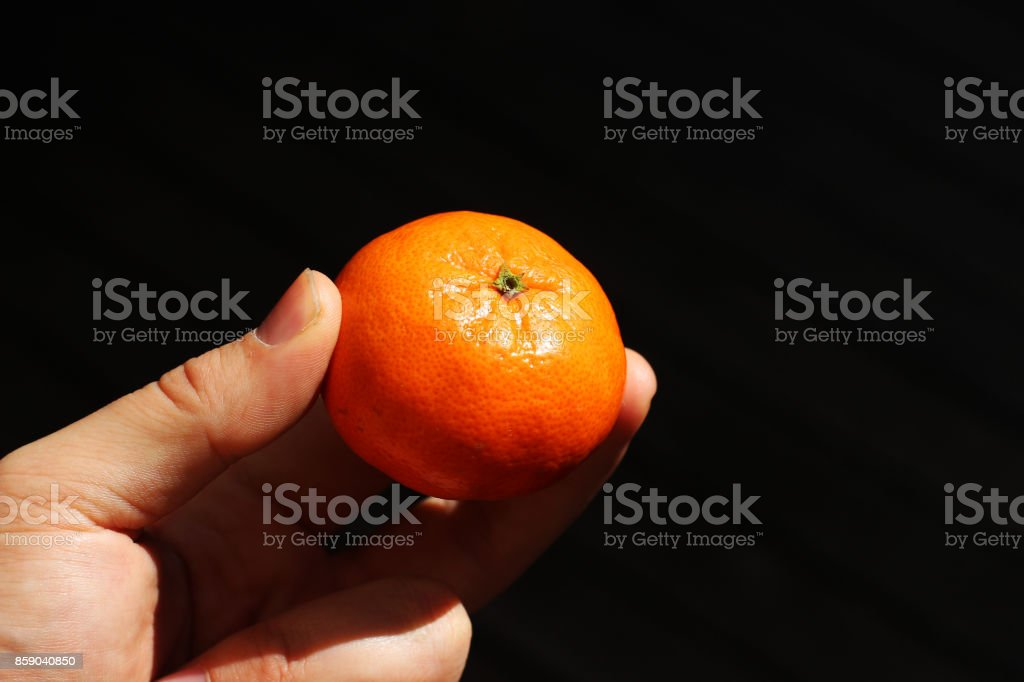 A human hand holding a naartjie (tangerine). This is a popular fruit in South Africa. stock photo