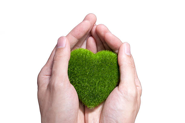 human hand holding green grass heart on isolated - recycling heart bildbanksfoton och bilder