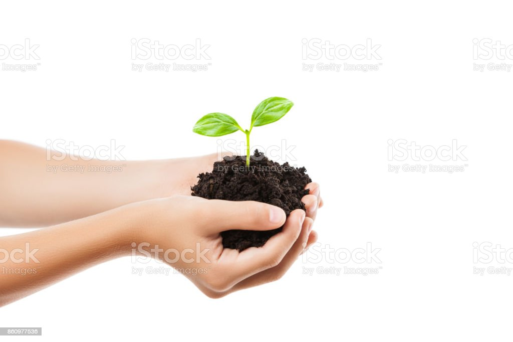 Human hand holding green sprout leaf growth at dirt soil stock photo