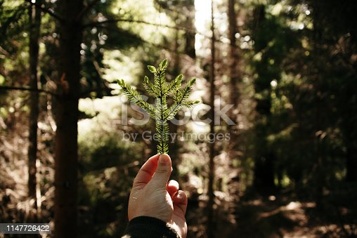 A humenah nad holding a bunch of leaves from a coniferous tree