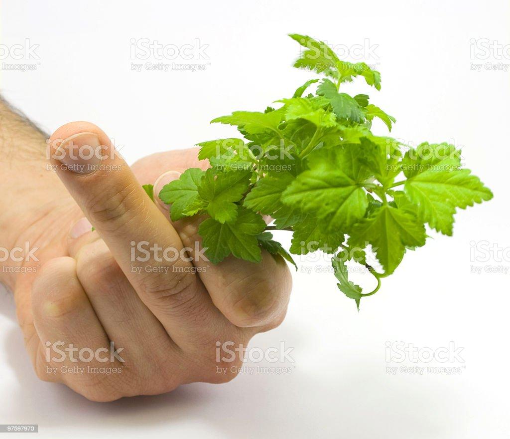 Human hand holding raspberry leaves royaltyfri bildbanksbilder