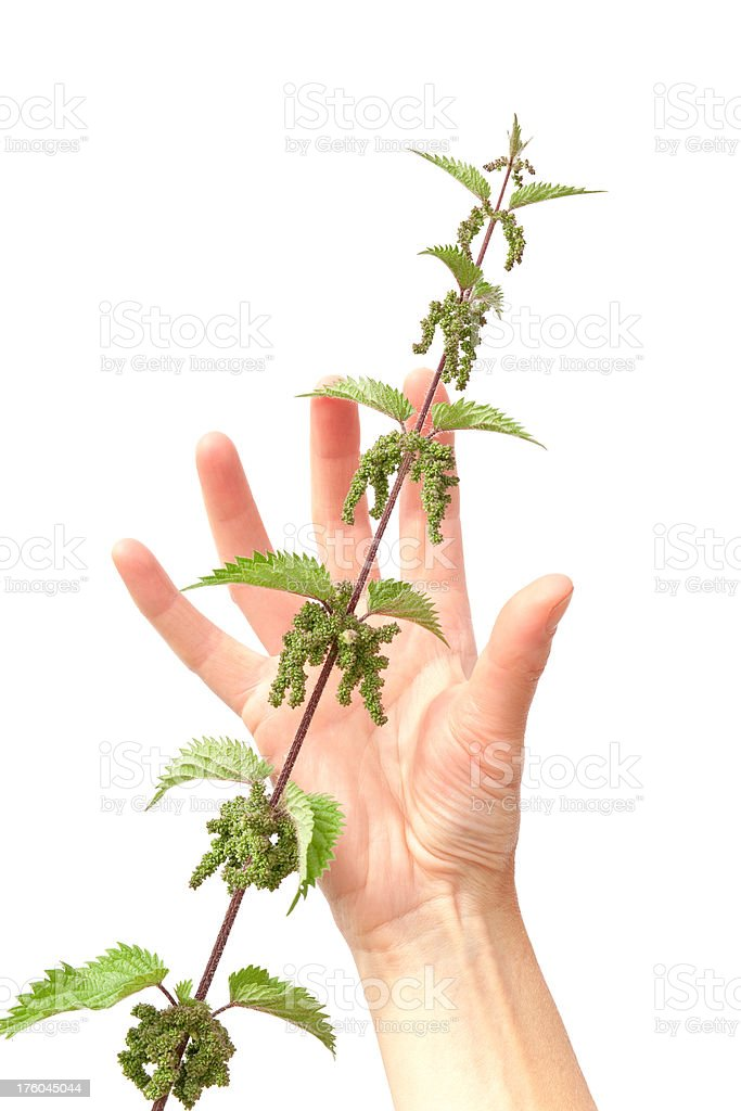 Human hand illustrating the Grasp the nettle metaphor royalty-free stock photo