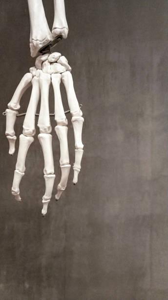 menschliche hand  - skelett hand stock-fotos und bilder